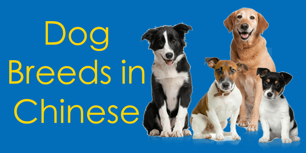 Dog Breeds in Chinese