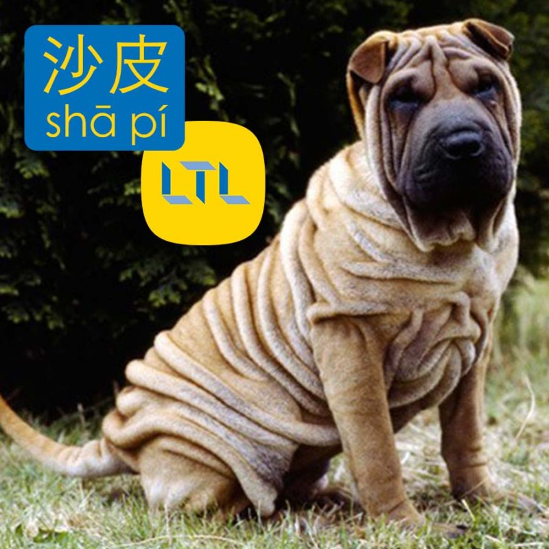 Shar-Pei - dog breeds in chinese